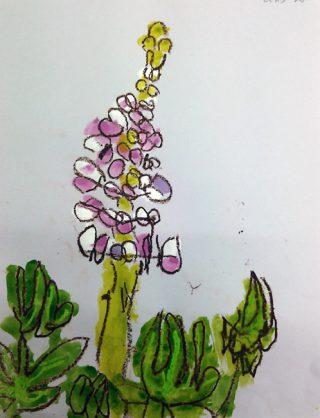 園小混合クラス3月1回目・みてかこう「ルピナス」